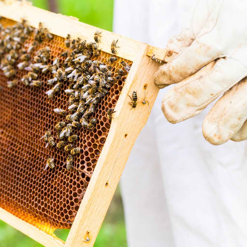 Qu'est ce que le miel ?  Miel cheveux crépus